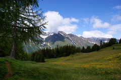 Alpiene weiden en Alpen Oetztal Stock Afbeelding