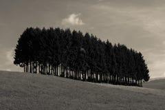 Alpiene weiden en geïsoleerde pijnboombomen Stock Fotografie