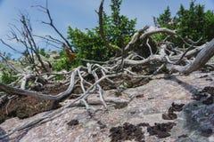 Alpiene weiden Taganay Royalty-vrije Stock Fotografie