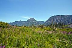 Alpiene Wilde Bloemen Stock Foto
