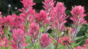 Alpiene wildflowers stock videobeelden