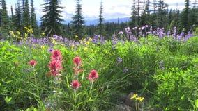 Alpiene wildflowers stock video
