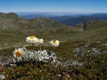 Alpiene zonnestraal Stock Foto's