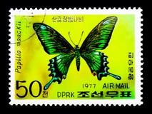 Alpiene Zwarte Swallowtail (Papilio-maackii), Vlinders serie, c stock fotografie