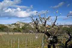 alpilles法国les南部的春天 免版税图库摄影