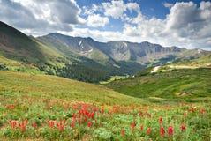 alpin äng Royaltyfri Bild