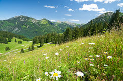 Alpin äng i germany Arkivbild