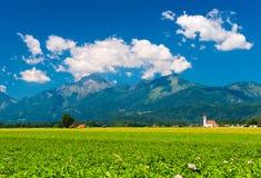 Alpin äng med blommor, Slovenien Arkivbild