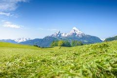 Alpin äng med snöig Watzmann Arkivbilder