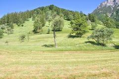 Alpin äng nära Tolmin, Slovenien Royaltyfri Bild