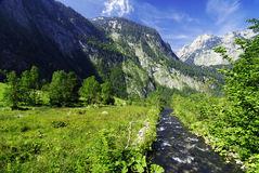 alpin bäck arkivfoto