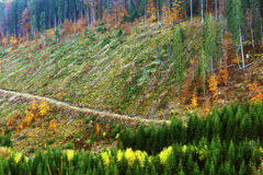Alpin Deforestation royaltyfri bild