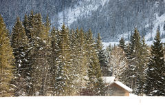 Alpin im Schnee stockbild