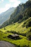 Alpin koja i höst fotografering för bildbyråer