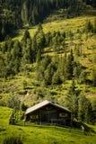 Alpin koja i hösten, ståendesikt royaltyfri foto