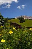 Alpin koja under den Sasso dellaen Croce, Alta Badia, Dolomites, Italien Royaltyfri Fotografi