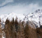 alpin liggandevinter Skog, bergväg och höga snö-korkade berg Royaltyfria Bilder