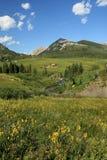 alpin plats Arkivfoto