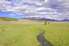 Alpin plats med strömmen i Rocky Mountains Royaltyfri Foto