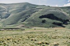 Alpin sheepherder - översikt av Italien royaltyfri foto