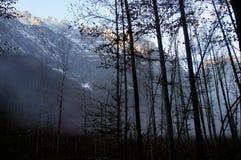 Alpin skog runt om konungs sjö Royaltyfri Fotografi