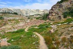 Alpin slinga i medicinpilbågeberg av Wyoming Royaltyfria Bilder