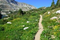 Alpin slinga i medicinpilbågeberg av Wyoming Royaltyfri Foto