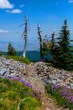 Alpin slinga med vildblommor Arkivfoton