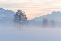 Alpin solnedgång och snöig fält Royaltyfria Bilder