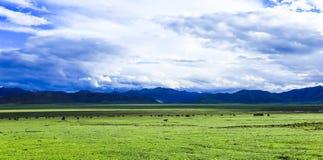 alpin steppe royaltyfri bild
