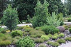 alpin trädgård Royaltyfri Fotografi