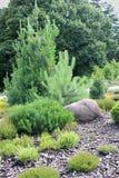 alpin trädgård Arkivbild