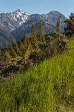 Alpin vegetation i Nya Zeeland Royaltyfri Bild