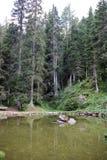 Alpin wenig Fluss lizenzfreies stockbild