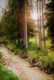 Alpin wenig Fluss stockfoto