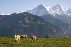 Alpina ängar Fotografering för Bildbyråer