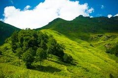 alpina ängar Royaltyfria Bilder