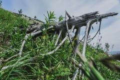 Alpina ängar Taganay Arkivfoto