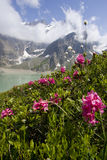 alpina Österrike örtar salzburg Arkivbilder