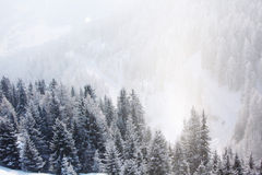 alpina bergsnowtrees Royaltyfri Fotografi