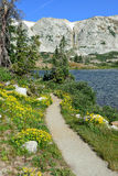 Alpina blommor framme av medicinpilbågebergen av Wyoming Royaltyfri Fotografi