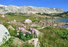Alpina blommor framme av medicinpilbågebergen av Wyoming Arkivfoto
