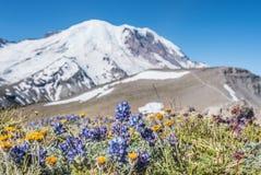 Alpina blommor framme av Mount Rainier arkivfoton