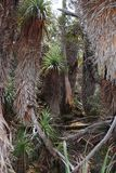 Alpina Forrest, Mt Fält tasmania Royaltyfri Foto