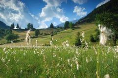 alpina Spring Valley Royaltyfria Foton