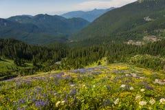 alpina vildblommar arkivfoto