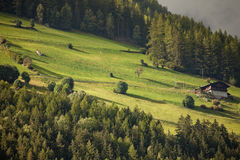 An alpine alm, with its green meadow Stock Photography
