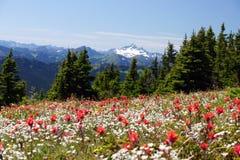 Alpine Ansicht des Sommers lizenzfreies stockbild