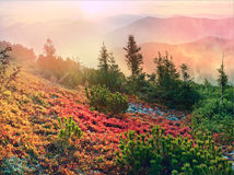 Alpine autumn in Gorgany Royalty Free Stock Images