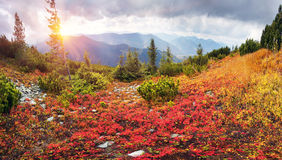 Alpine autumn in Gorgany Stock Photography